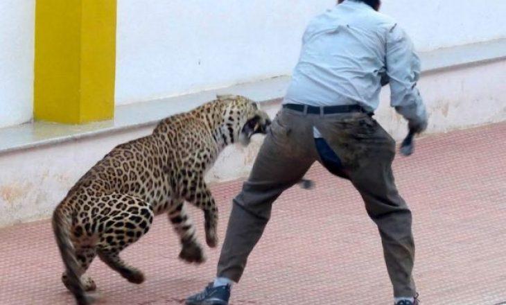 Leopardi sulmon gjashtë persona në një shkollë në Indi (Video)