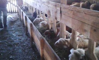 Ferma e deleve që dyshohet se përhapi virusin nga i cili vdiqën dy shqiptar nga Simnica