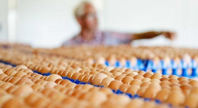 Miliona vezë tërhiqen nga dyqanet në Evropë, dyshohen se janë prekur nga lëndë toksike