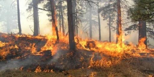 Ministria bënë apel për kujdes në parandalimin e zjarreve