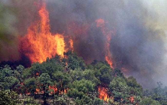 Zjarr masiv në Vorë, rrezikohet një fabrikë fishekzjarresh