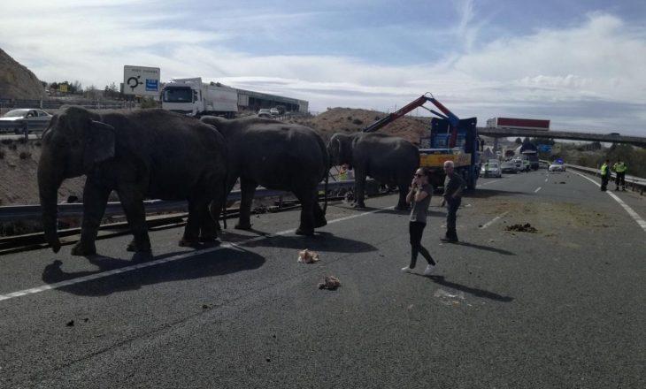 Elefantët shëtisin nëpër autostradë, njëri pësoi në aksident