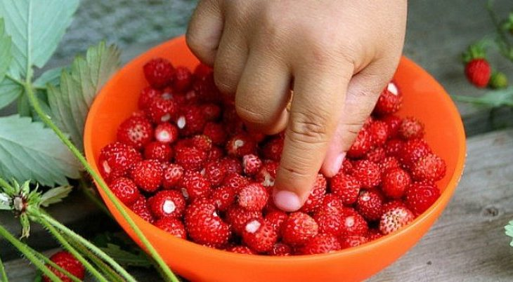 Pemët dhe perimet që kryesojnë listën e ushqimeve me pesticide