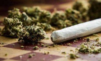 Policia konfiskon sasi të marihuanës në pesë komuna