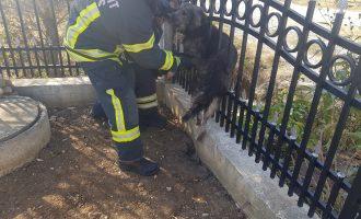 Ja si e shpëtojnë zjarrfikësit e Malishevës një qen të bllokuar në rrethoja