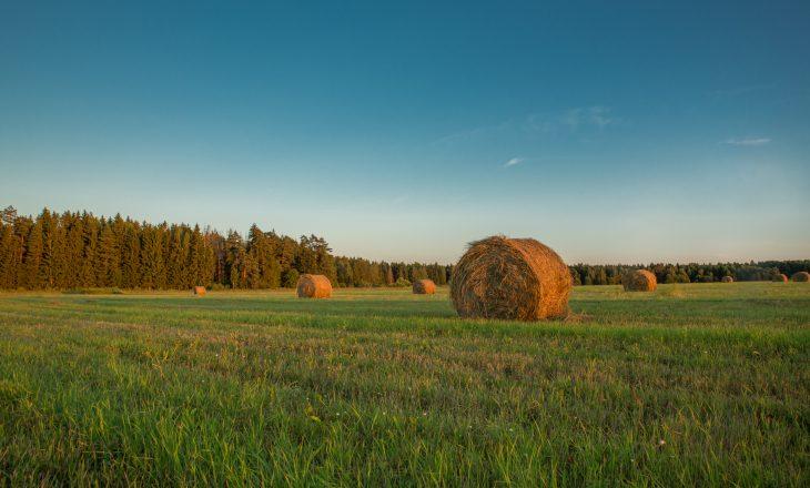 IPKO – Stacionet agrare tregojnë për kushtet e mbjelljes së grurit