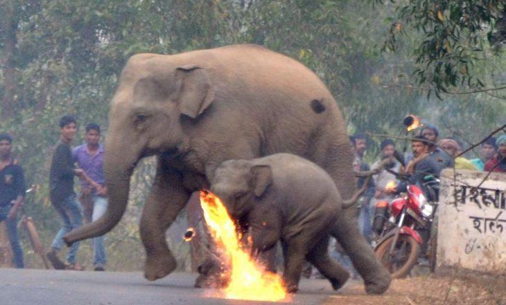Indianët budistë sulmojnë me bomba zjarri elefantët