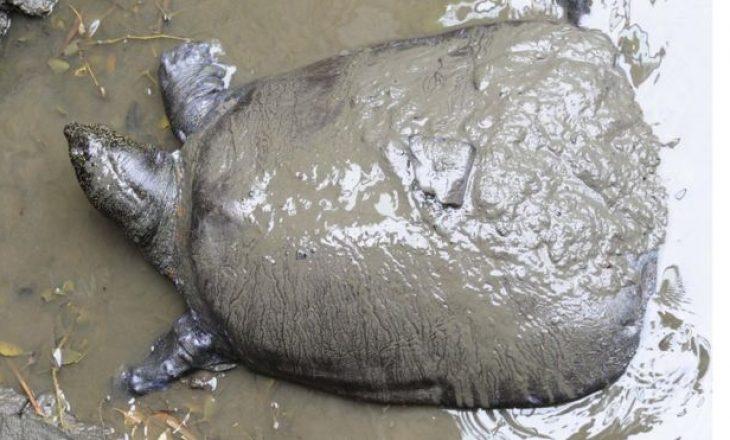 Vdes breshka më e rrallë në botë