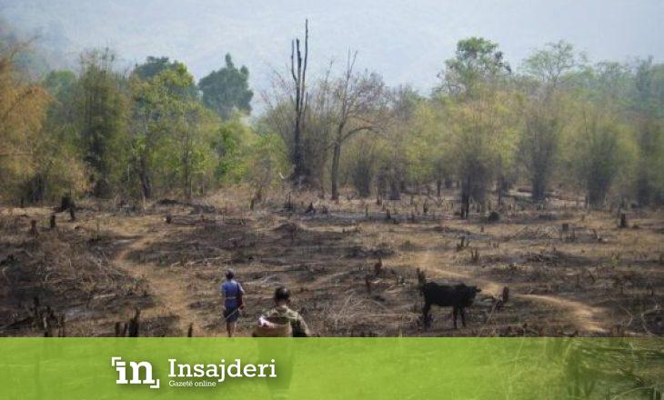 Një milion lloje të kafshëve dhe bimëve rrezikojnë të zhduken