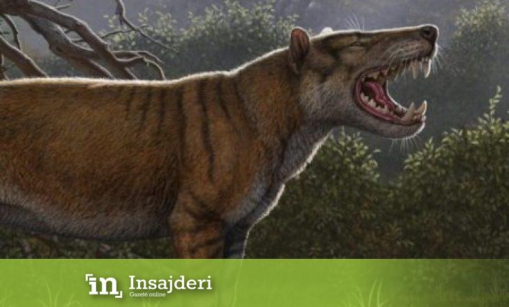 Shtatë herë më i madh se luani – Zbulohet një nga kafshët më të mëdha të Tokës