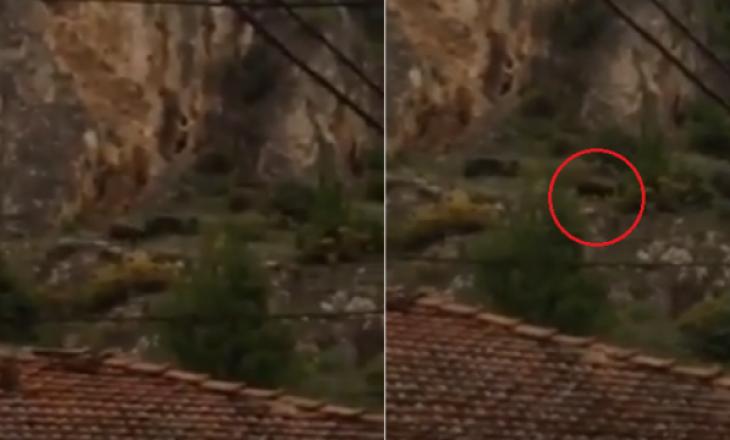 Zbulohet vendndodhja e ariut të shumëkërkuar në Prizren