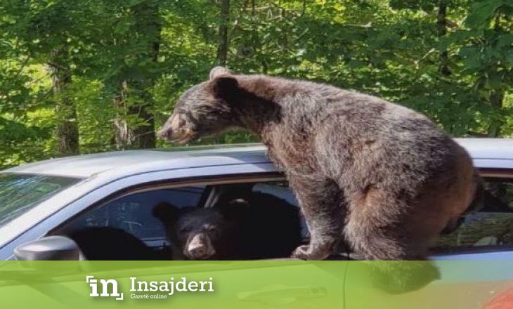 Arinjtë hynë në veturë pasi pronari i harroi dritaret hapur