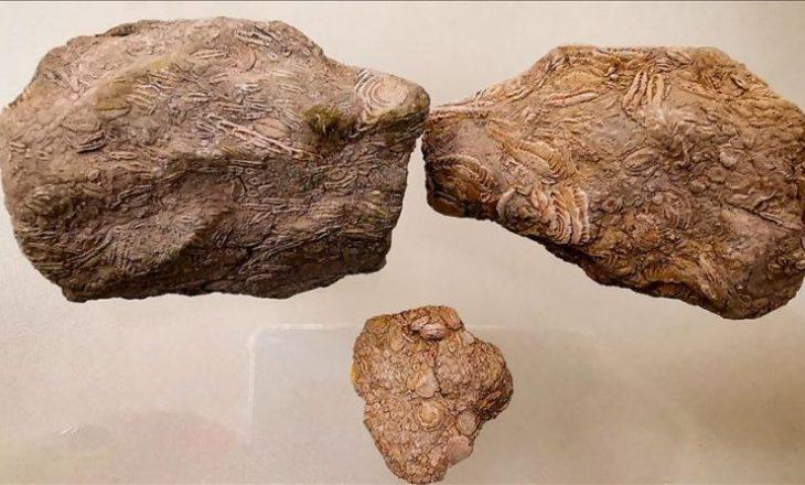"""""""Nummuliti"""" 50-milionë vjeçar ekspozohet në muze në Turqi"""