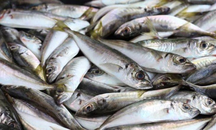 OAK: Maqedonia bllokon eksportin e Peshkut nga Kosova