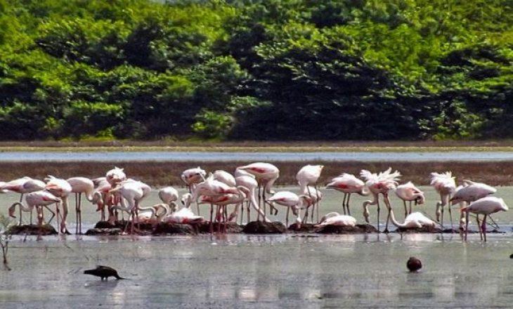 Kriporja e Ulqinit shpallet park natyror