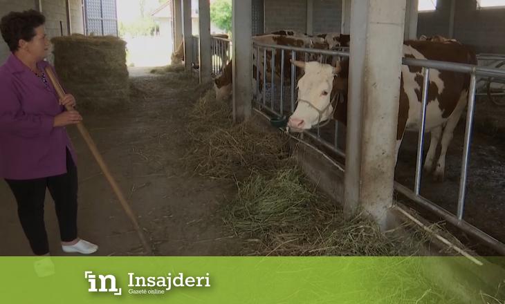 Rrëfimi i fermerës që kujdeset për bagëtitë: 'Nga një fermë në një biznes'