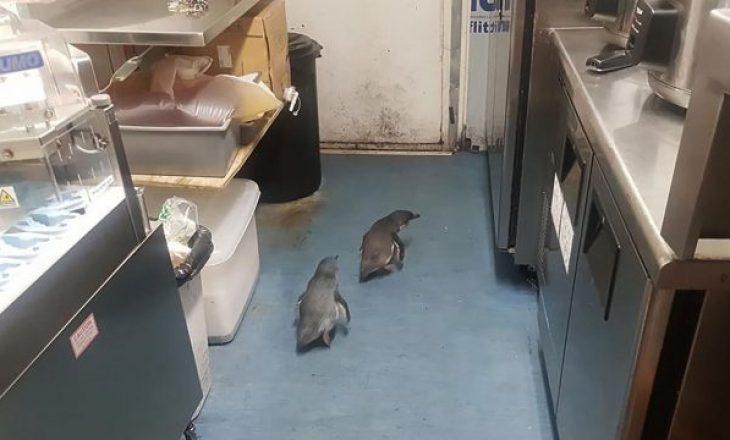 """Policia kap dy pinguinët """"hajdutë"""", që vidhnin ushqim në një restaurant"""