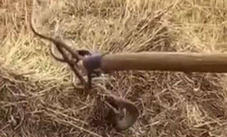 I prerë me kosë, por gjarpri reagon kur ngacmohet nga i riu në Podujevë