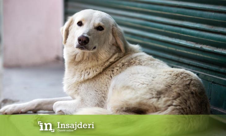 """""""Prishtina Dog Shelter"""" hap donacion për kujdesin e qenëve endacak"""