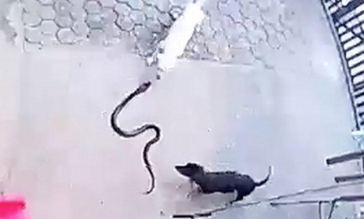 Njëri ngordhi e tjetri humbi shikimin – qentë luftojnë deri në 'vdekje' për ta shpëtuar beben nga gjarpri
