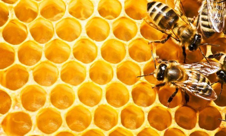 Prodhimi i mjaltit në Evropë ndikohet nga i nxehti