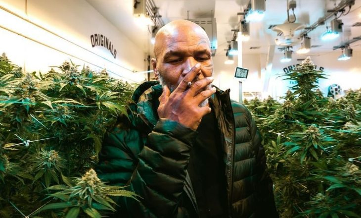 Tyson: Konsumoj 40.000$ marihuanë në muaj, ja sa fitoj nga ferma ime