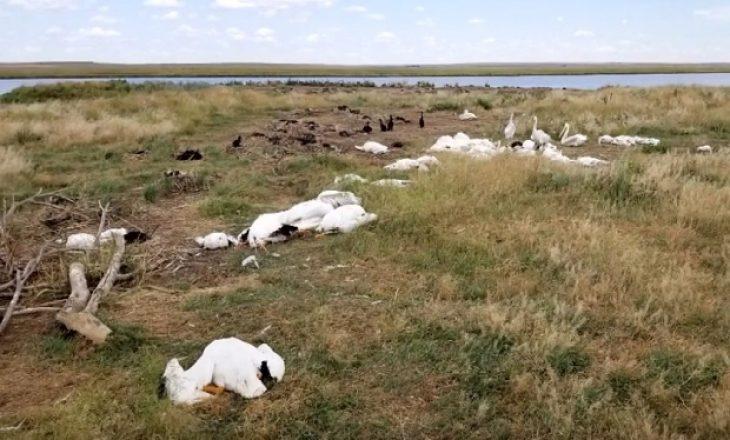Skenë e tmerrshme: 11.000 zogj kanë rënë nga qielli të ngordhura