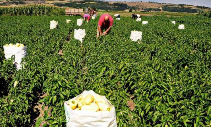 Sektori i bujqësisë u rrit 24,1%