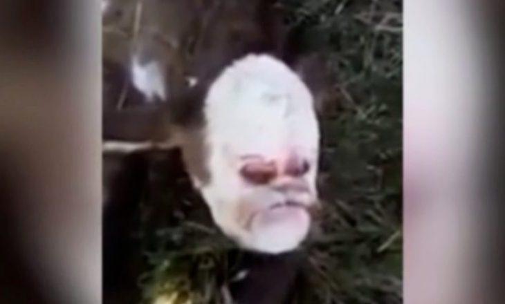 """Lind viçi me """"fytyrë të njeriut"""", ekspertët shpjegojnë se çfarë ka ndodhur"""