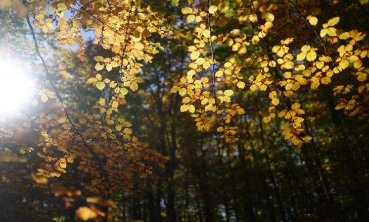 Magjia e vjeshtës në pyjet shqiptare