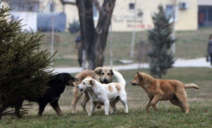Deri më 2025 pritet të rregullohet problemi me menaxhimin e qenve endacakë