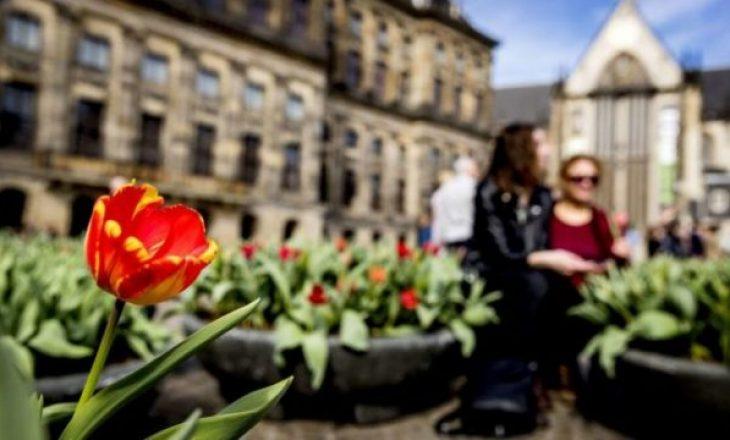 Mashtrim në tregun e luleve, tulipanët nuk lulëzojnë