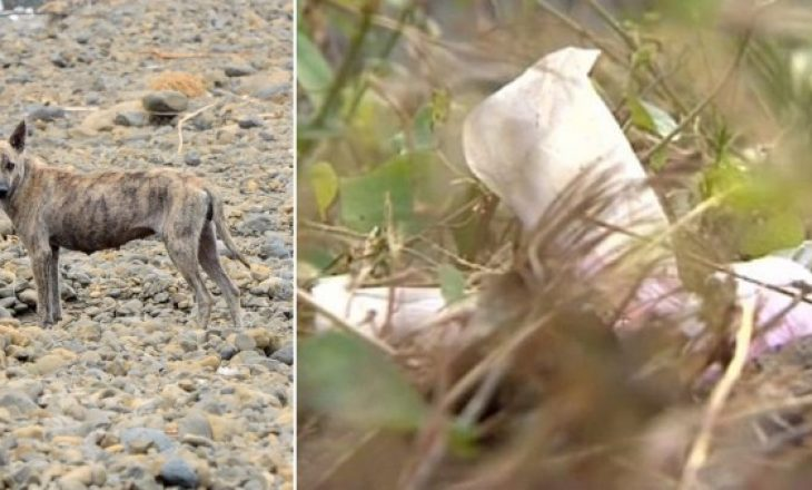 Ngjarje e rëndë, qentë e hanë të gjallë të porsalindurin
