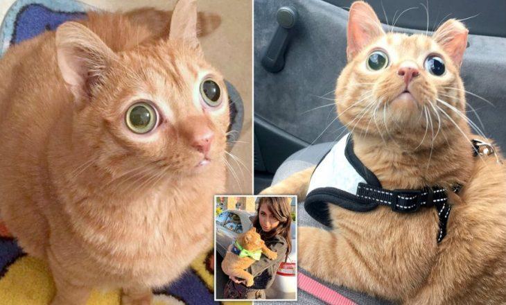 Njihuni me Pataten, macen me sy të rrallë që ka 50,000 ndjekës