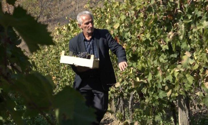 Vreshtari nga Rahoveci detyrohet të shes rrushin në Mal të Zi, shkak çmimi i ulët në vend