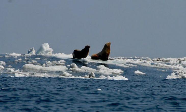 Shkrirja e akullit të Arktikut përhap virusin vrasës