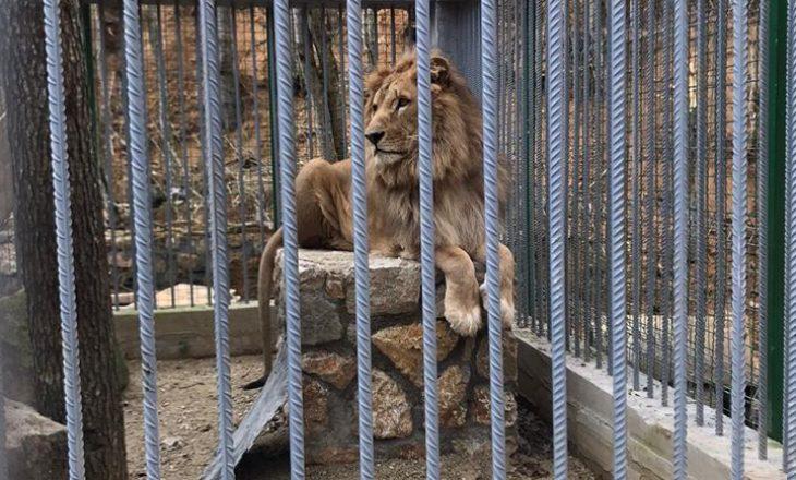 Luani në Gjilan: Publikohen pamjet e tij nga organizata e njohur