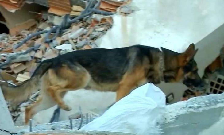 Njihuni me 'Brandin', heroin shqiptar që zbuloi personat e gjallë nën rrënojat e 6-katëshit në Durrës