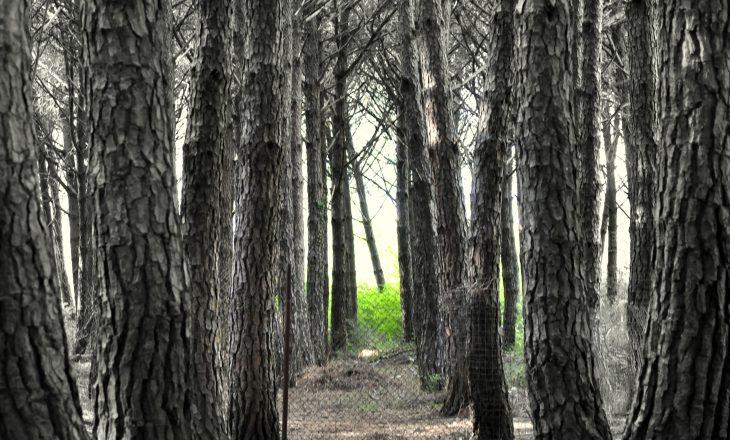Sindikata e Pylltarisë shpreh shqetësimin për vrasjen e inspektorit në Prishtinë