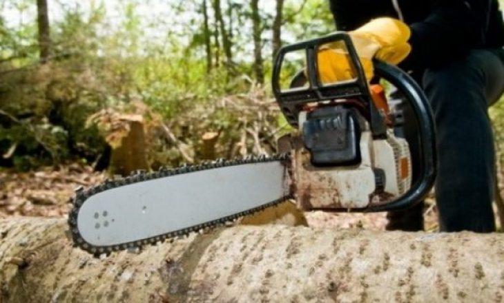 Gjykatat nuk shqiptojnë dënimet e duhura për prerësit ilegal të pyjeve