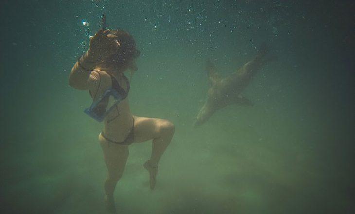Pamje të tmerrshme, momenti kur luani i detit kafshon 25-vjeçaren
