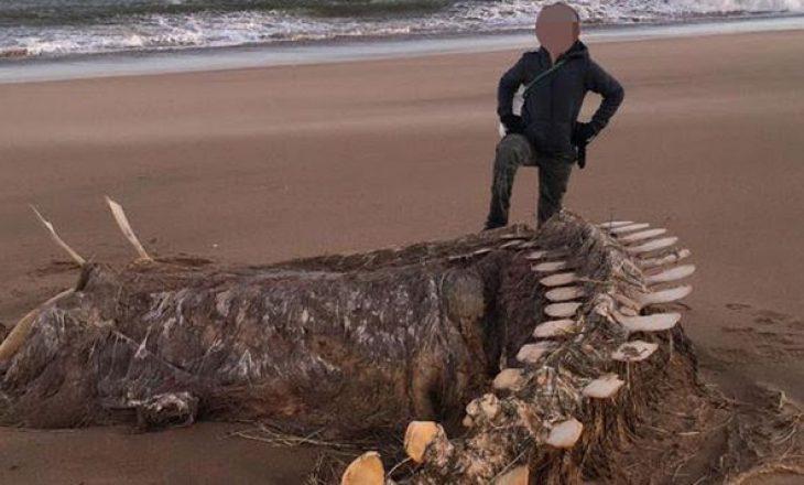 Skeleti i kafshës misterioze gjendet në bregdet: A është ky përbindëshi Loh Ness
