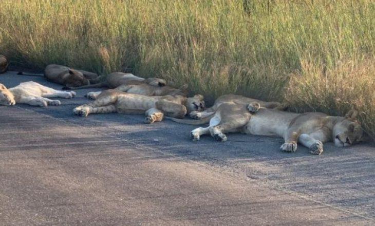 Luanët pushojnë nëpër rrugë gjatë ndalesës për shkak të koronavirusit në Afrikën e Jugut