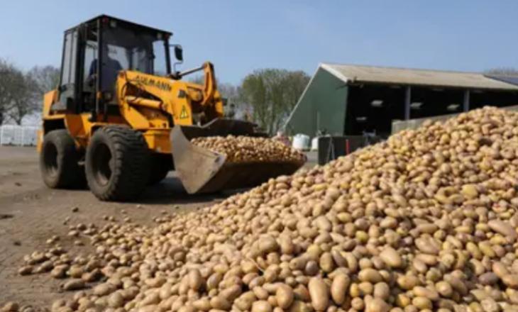 Belgjika u bën thirrje popullatës që të hanë më shumë patate – sepse nuk po kanë ku t'i shesin