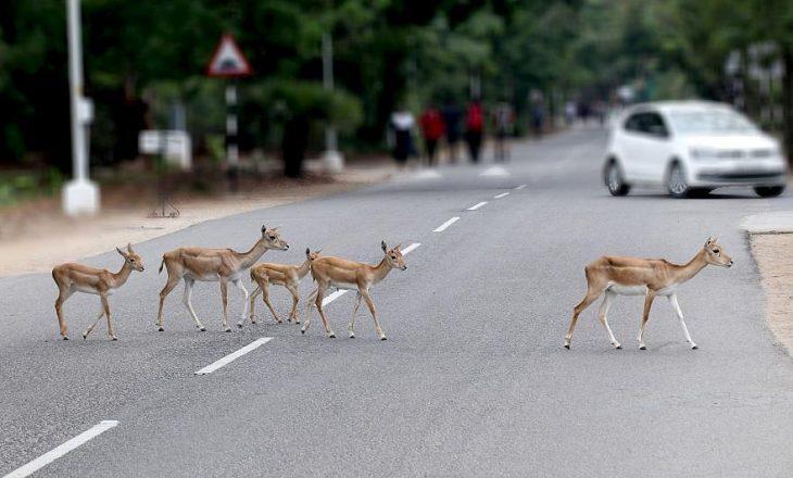 Trafiku i ngarkuar rrugor  kërcënon speciet në zhdukje