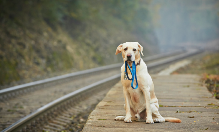 Shkenca shpjegon se si një qen i humbur shpesh gjen rrugën për në shtëpi