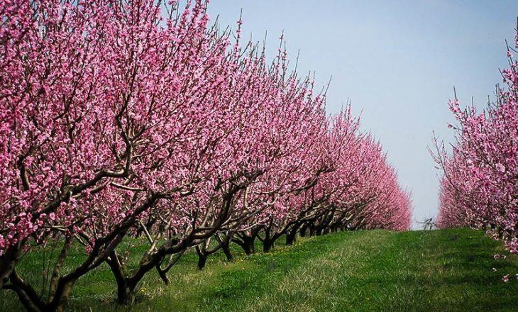 Ky frut veror ndihmon në forcimin e sistemit tuaj imunitar