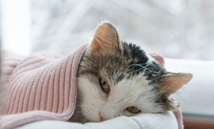 Këto shenja tregojnë që macja juaj është e sëmurë dhe ka nevojë për një veterinar