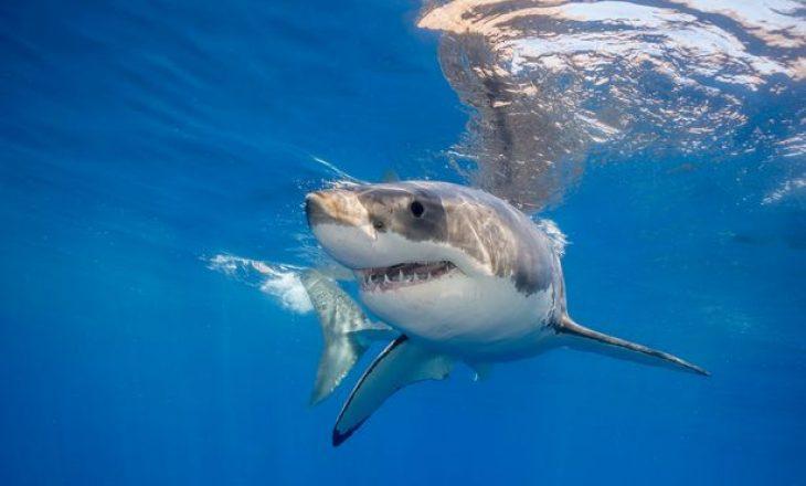 Zhdukja misterioze e peshkaqenëve të bardhë