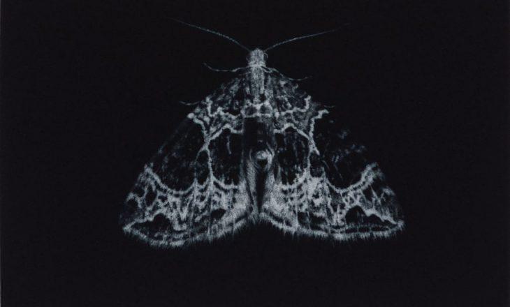 Artisja ka zgjedhur si subjekt fluturat e natës, për të vetëdijësuar lidhur me rënien e numrit të tyre